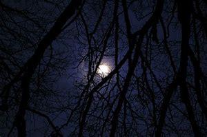 moon thru the trees