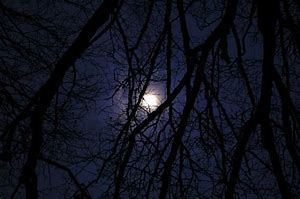 moon thru the trees